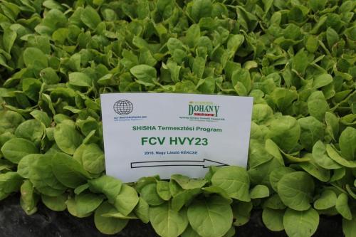 SHISHA FCV HVY23